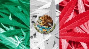 mexico-marihuana