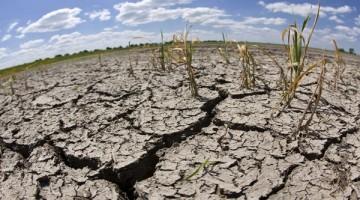 GOL02. GOLZOW (ALEMANIA), 05/06/08.- Vista general de un campo seco y agrietado en Golzow, Alemania, el 5 de junio de 2008. La zona este del estado federal de Brandenburgo padece una sequía por la ausencia de lluvias en tres semanas y las temperaturas altas. EFE/Patrick Pleul