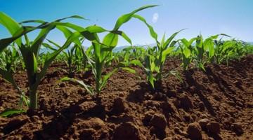 La-agricultura-de-conservacion-mitiga-el-cambio-climatico