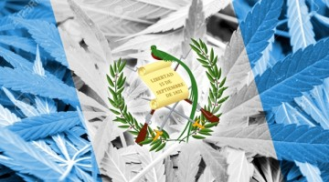 37665155-Guatemala-Flag-on-cannabis-background-Drug-policy-Legalization-of-marijuana-Stock-Photo