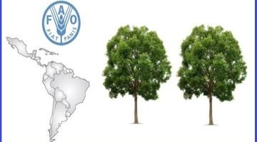 FAO-agricultura-deforestacion