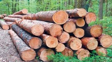 la-tala-ilegal-se-puede-parar