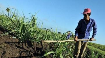 Debatiran-Panama-cambios-alimentacion-agricultura_959614215_12640370_667x375