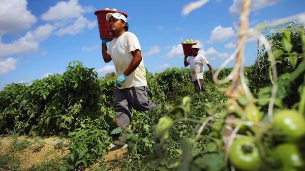 Agricultura-mexicana-bodegas-llenas-bolsillos-vacios