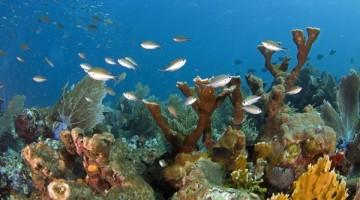 Arrecifes-Caribe-mexicano-desarrollo-turistico_TINIMA20140924_0031_3