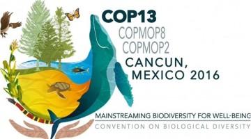 BMM52_COP13