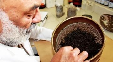 IVIC-recuperación-de-suelos-contaminados