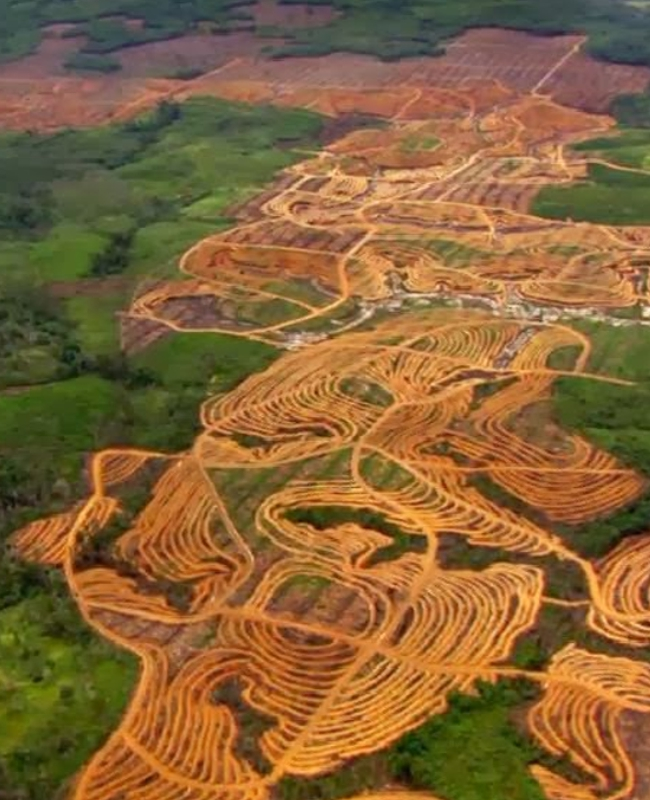nodal deforestacion2