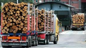 Deforestación, papeleras, modelos de desarrollo - NODAL