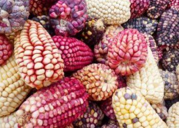 Bolivia semillas