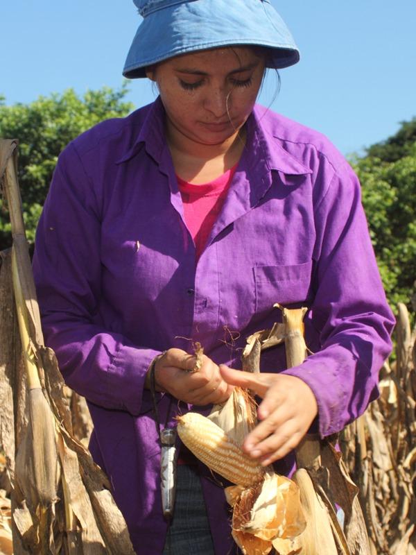 salvar las semillas américa latina