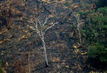 Incendios en la Amazonía (Brasil) el 25 de agosto de 2019. FOTO: AFP