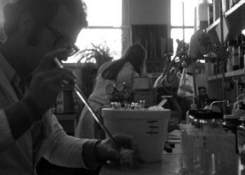 Foto: Ulloa Retamal, D. Escuela de Química y Farmacia, ca. 1970. Colección Archivo Fotográfico, Archivo Central Andrés Bello, Universidad de Chile.